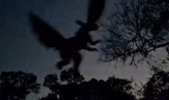 Jersey Devil sighting fake or real? Video - THE HORROR ...