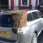 Bees chase car for 2 days to rescue queen