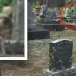 Bizarre 'alien humanoid' caught on camera hiding in cemetery