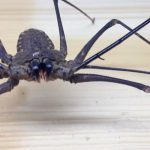 Watch a Man Tease This Horrifying Giant Spider… Until it Attacks Him