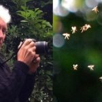 Away with the fairies? University lecturer claims to have photographed real-life tiny tinkerbells flying through the air in the British countryside